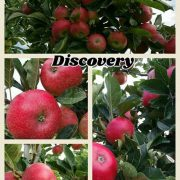 discovery appel